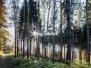 Wälder und Wiesen